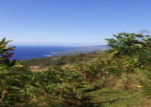 luxury organic farm for sale in hawaii