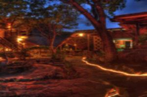modern rainforest treehouse-style home